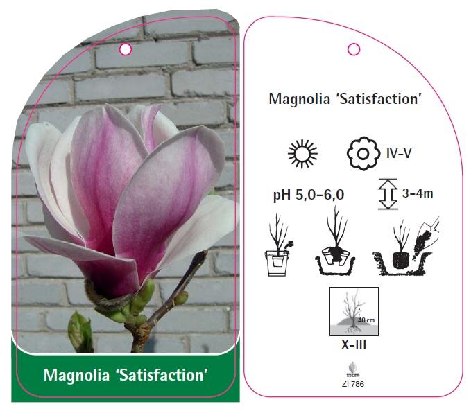 magnolia 39 satisfaction 39 sklep. Black Bedroom Furniture Sets. Home Design Ideas